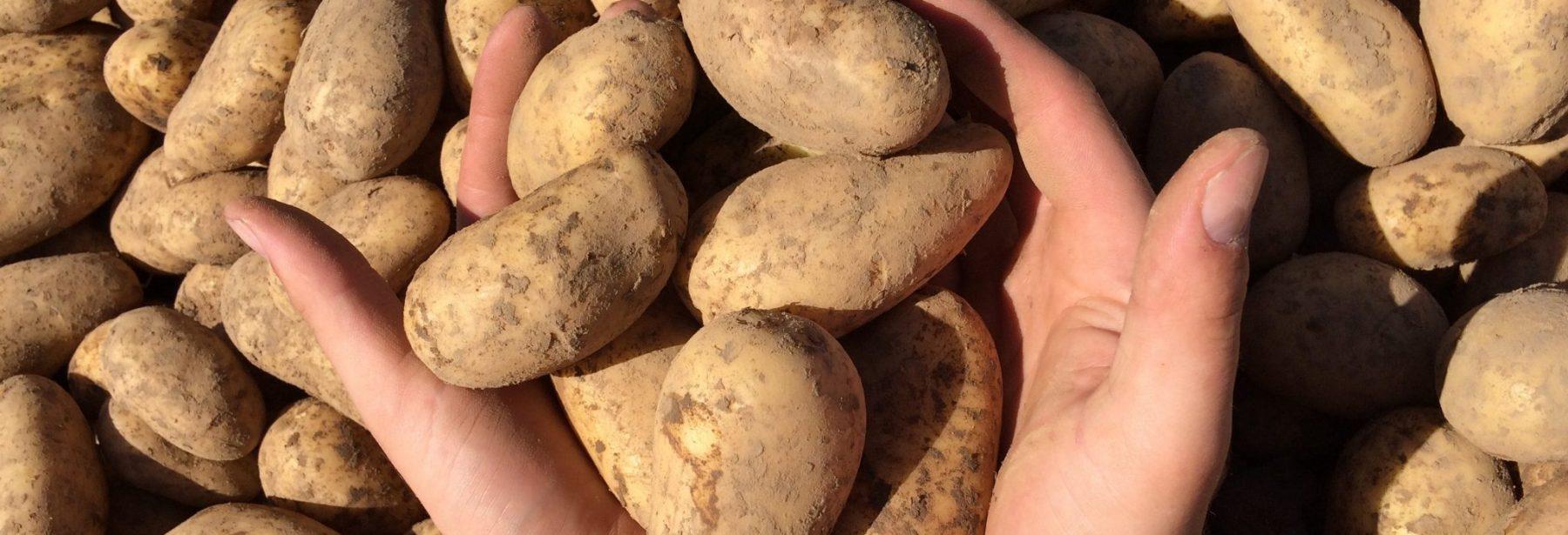 Rothkopf Eifel-Gemüse